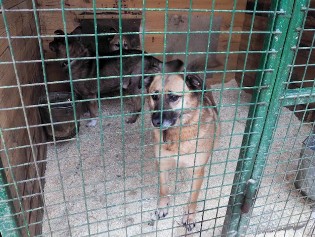 Dog in animal shelter, homeless dog in the cage
