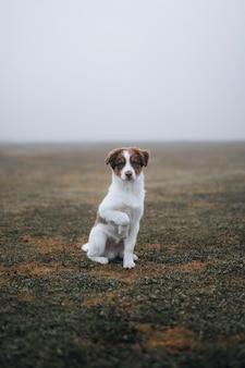 Собака в туманном поле