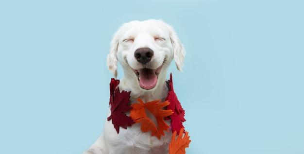 Собака осень с гирляндой из осенних листьев. изолированные на синем фоне.