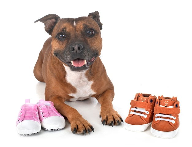 Dog and baby slippers