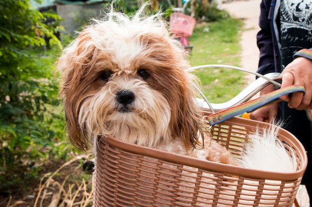 Dog  in a basket on a bicycle