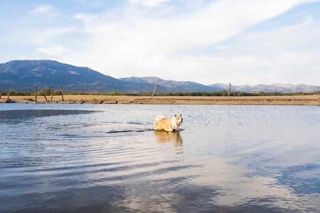 湖で水浴びする犬