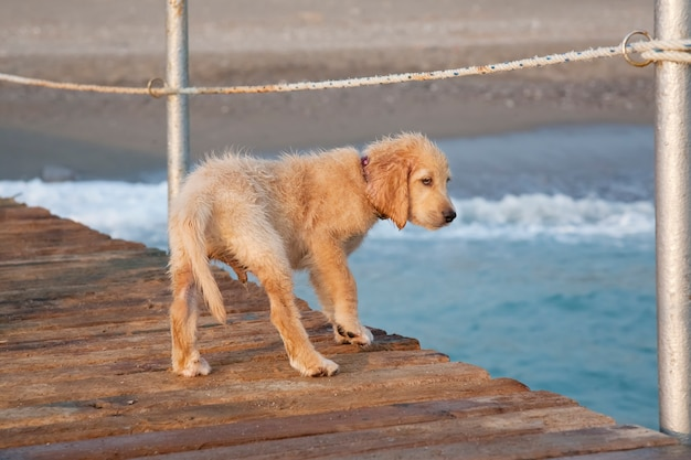 Dog on the beach. pets concept.