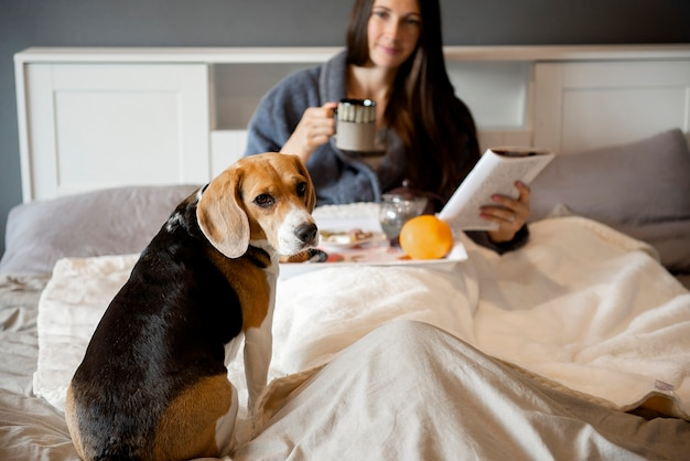 Dog beagle sitting on the bed while woman eats breakfast and reads book in bedroom