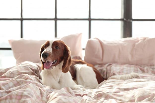 Cane a letto la mattina