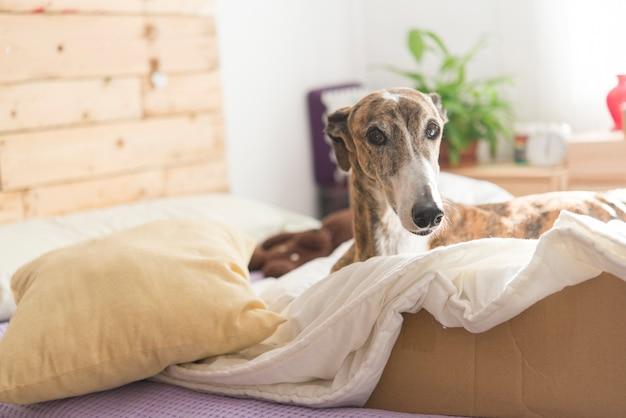 Dog in the bedroom relaxing