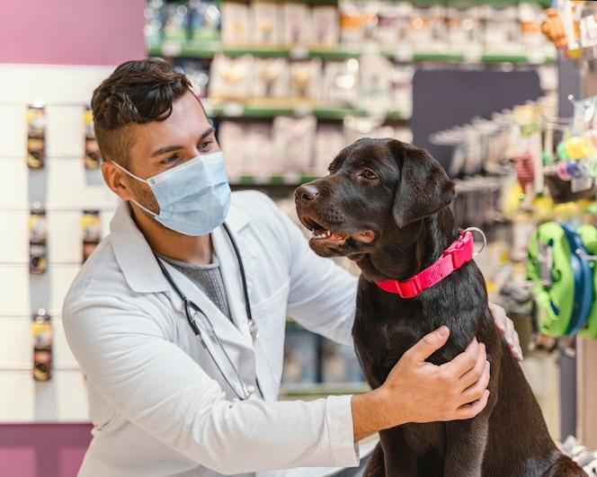 ペットショップで獣医にチェックされている犬