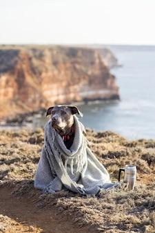 毛布で覆われている犬