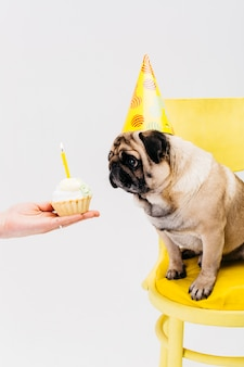 Dog in birthday hat sitting on chair and looking at cake
