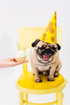 Dog in birthday hat sitting on chair