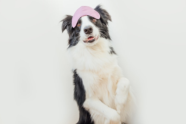 Dog border collie with the sleeping eye mask