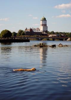 Собака породы золотистый ретривер плавает в озере, по ту сторону древней башни крепости.