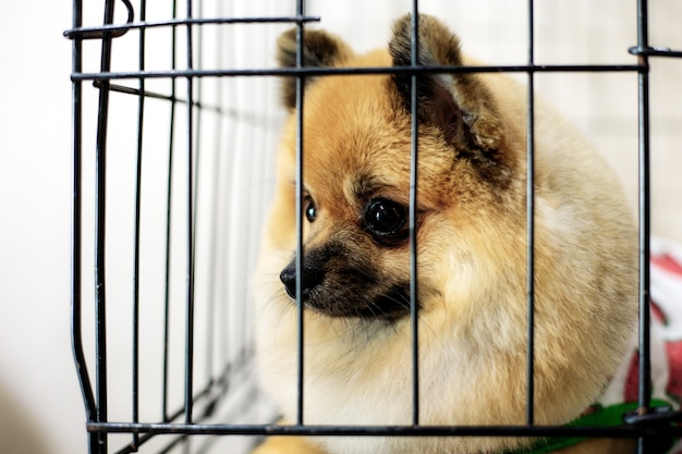 Dog in cage at pet shop.