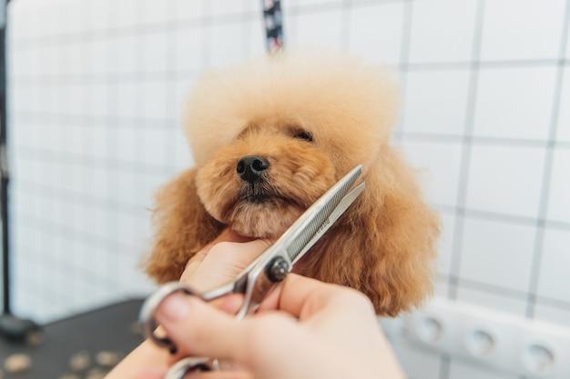 サロンでの犬の犬の世話グルーミング高品質の写真