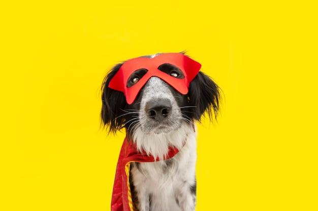 빨간 망토와 마스크를 쓴 영웅으로 분장한 개 카니발이나 할로윈. 노란색 배경에 고립