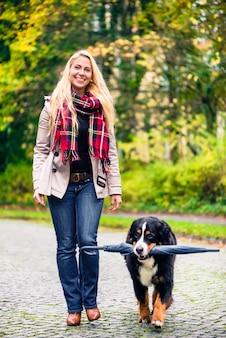 Dog carrying umbrella of his mom in autumn walk