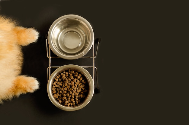 Dog or cat paws and bowl with dry food and water