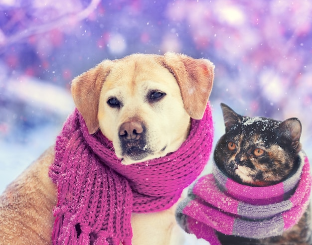 Dog and cat wearing knitted scarf sitting together outdoors in the snow in winter