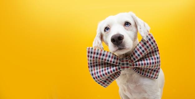 Собака празднует день рождения, карнавал или новый год в винтажном галстуке-бабочке