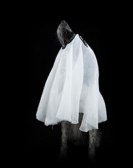 유령으로 분장한 할로윈을 축하하는 개. 검은 표면에 절연