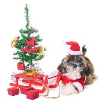 Dog and christmas