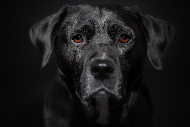 Cane da vicino ritratto sul muro scuro
