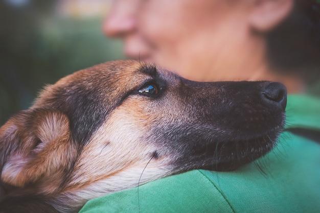 Собака прижалась к плечу женщины, животное выражает радость и преданность