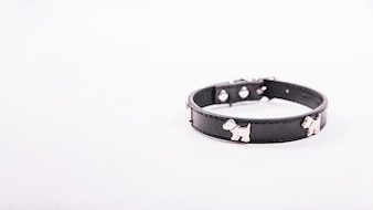 Dog collar on white