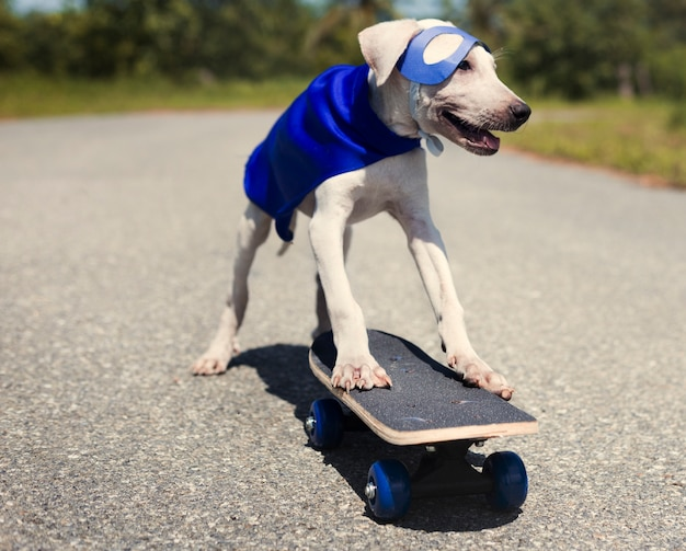 Dog costume cute superhero animal mammal