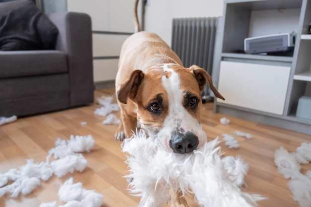 A dog destroying a fluffy pillow at home.