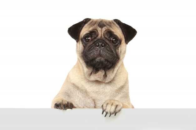 Dog dog isolated