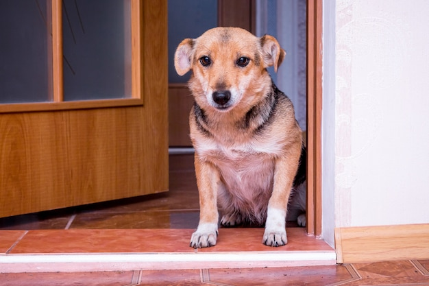 Dog at the door of the room