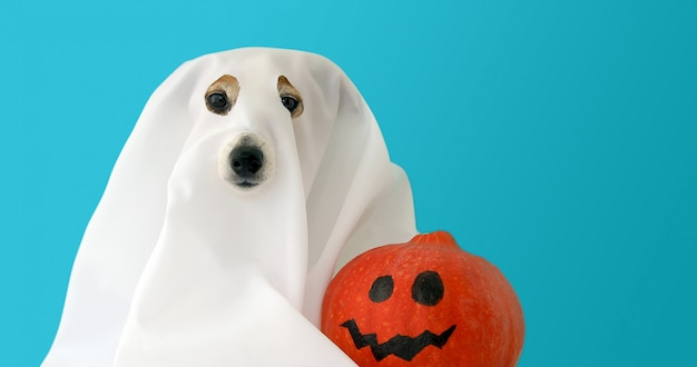 Dog dressed as ghost with orange pumpkin