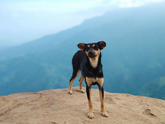 Dog on the edge of a cliff