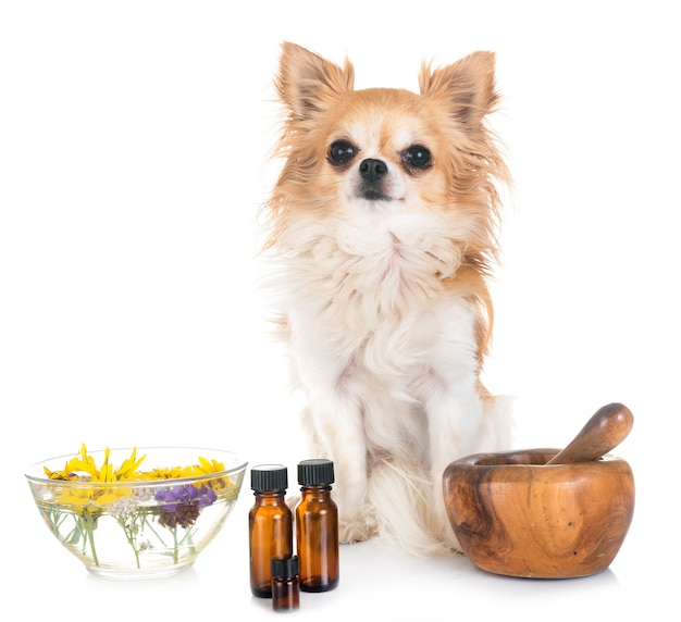 Dog and essential oils