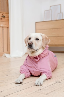 Dog in fashionable clothes. dressed dog. dog clothes. pet supplies
