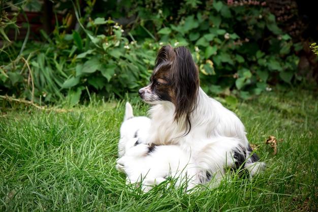Щенки корма для собак