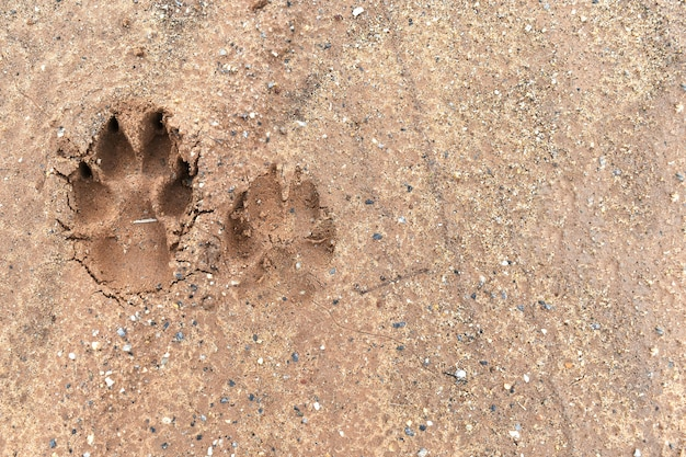 Отпечаток стопы собаки на земле