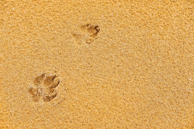 Собака на песке