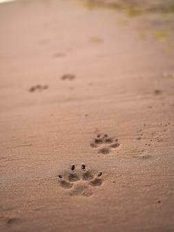 砂浜の濡れたビーチの幸せな動物の概念に沿って犬の足跡