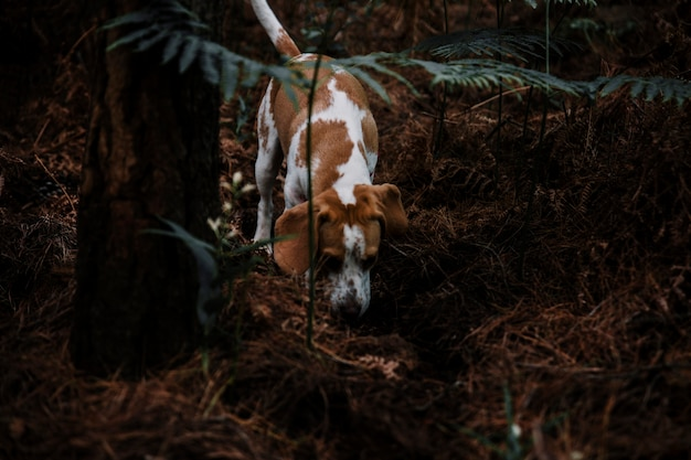 Dog foraging in forest