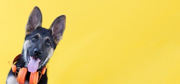 ヘッドフォンで犬のジャーマンシェパードの子犬、黄色の孤立した表面