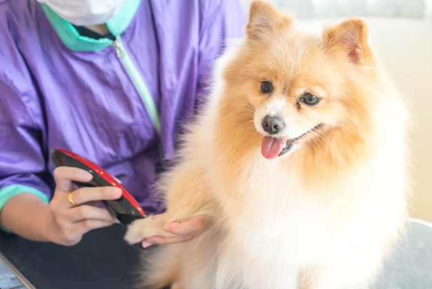 Dog getting groomed at salon