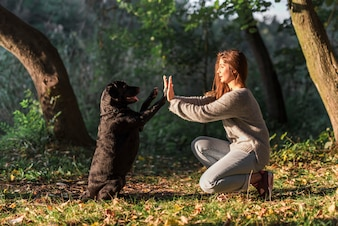 公園で彼のペットの飼い主にハイタッチを与える犬