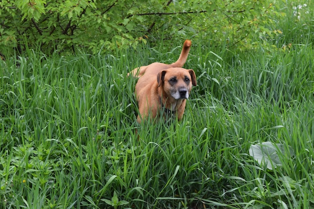 Dog in the grass