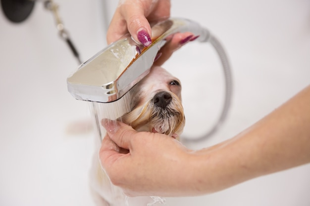 Dog in grooming salon
