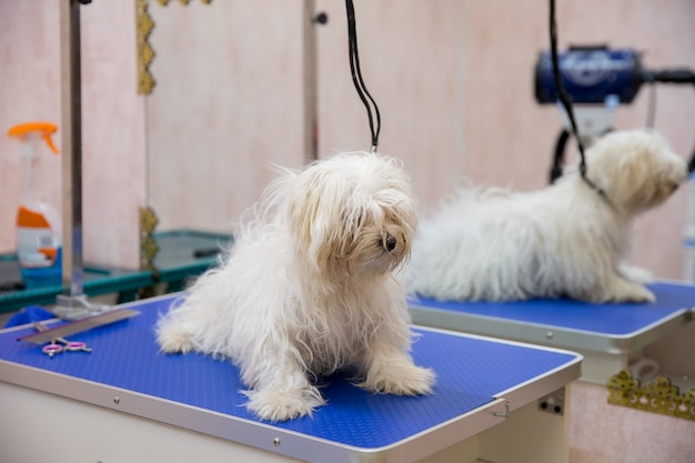 Dog in grooming salon