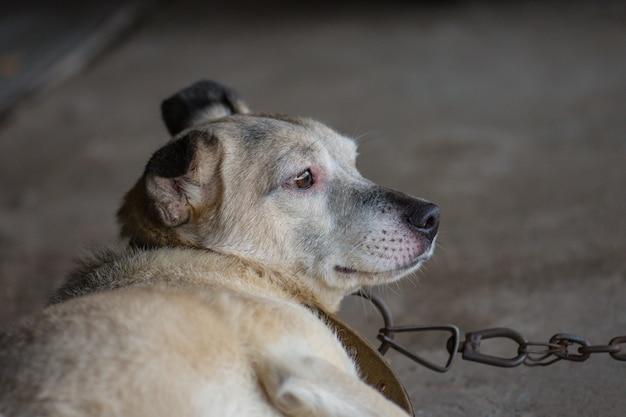 犬が田舎の家を守る