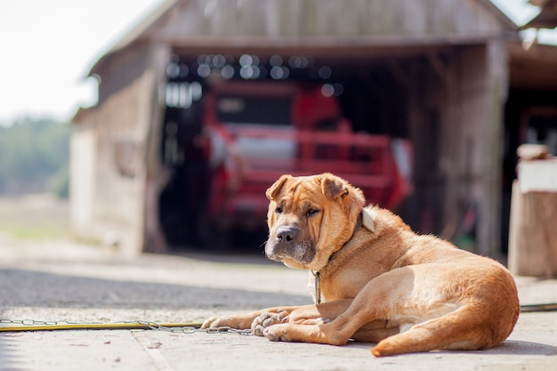 The dog guards the agricultural machinery on the street.