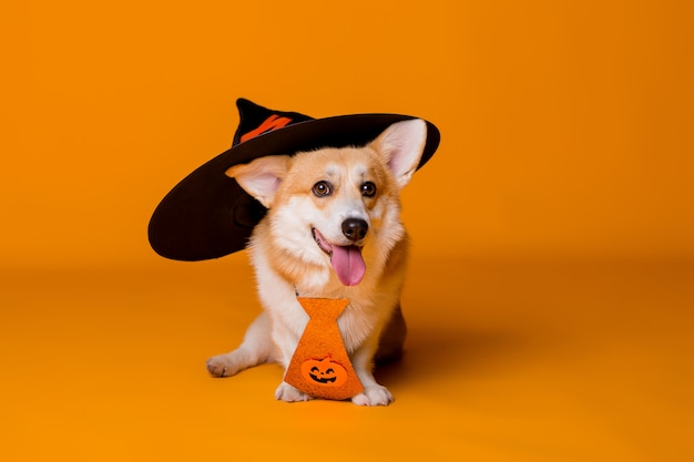 Dog in a halloween costume